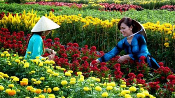 Thủ phủ hoa của miền Tây rực rỡ trước thềm xuân