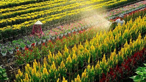 """Giới trẻ """"phát cuồng"""" với cánh đồng hoa bạt ngàn đầy màu sắc cách An Giang không xa"""