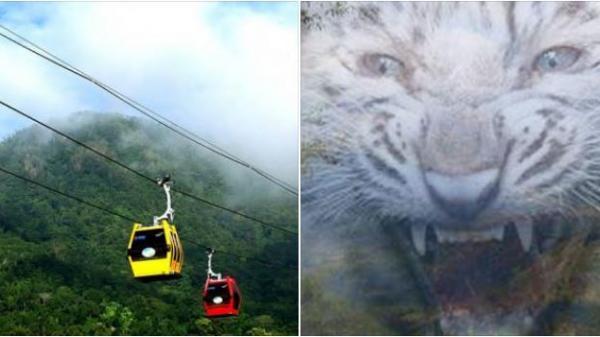 Ly kỳ: Chuyện thần Bạch Hổ hiển linh trên núi Cấm