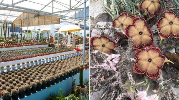 Vườn hoa xương rồng với nhiều 'quốc tịch' khác nhau ở Châu Phú khiến giới trẻ mê tít