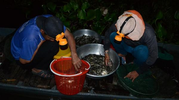 """Chợ """"âm phủ"""" Tha La độc nhất vô nhị mùa nước nổi ở An Giang"""