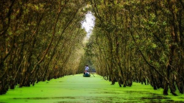 Về An Giang, ngắm rừng tràm Trà Sư đẹp nhất mùa nước nổi, khiến giới trẻ phải lịm tim