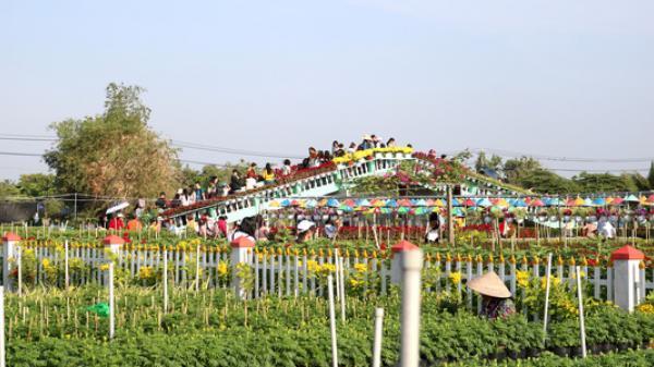 Chưa Tết, làng hoa Sa Đéc lớn nhất miền Tây đã nườm nượp khách