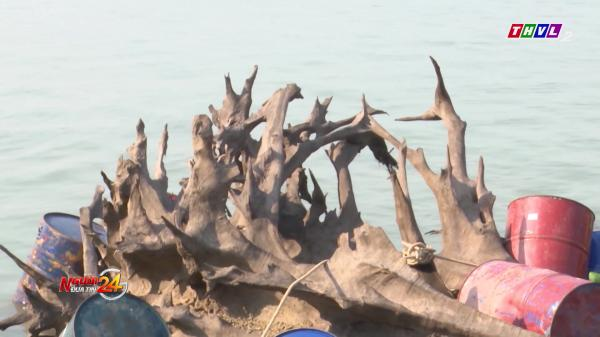 Miền Tây: Người dân bất ngờ vớt được 2 khúc gỗ khủng, khoảng 600 năm tuổi