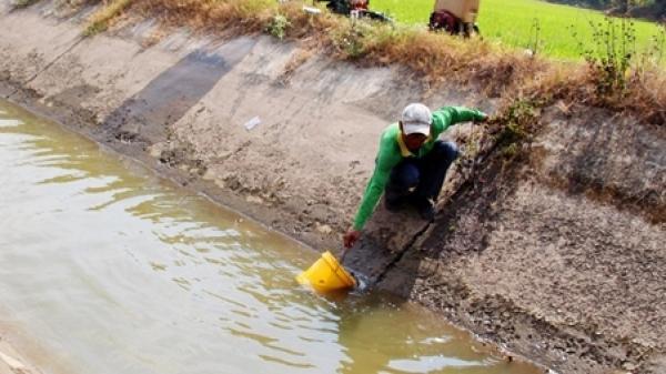 An Giang thông tin việc lấp kênh đặt cống khiến lúa ch.ết khát