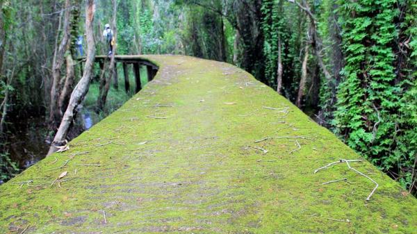Thám hiểm con đường xuyên rừng tràm đẹp nhất Miền Tây
