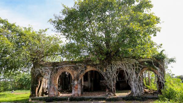 Ngôi đình cổ 'độc nhất vô nhị' nằm trong lòng cây bồ đề ở miền Tây