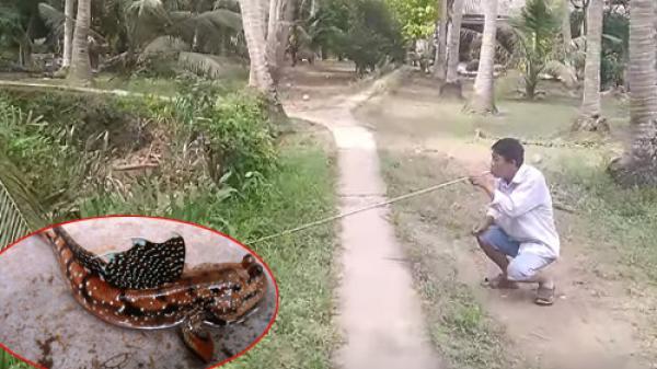 'Độc chiêu' thổi ống nhựa bắt cá bống của cao thủ miền Tây
