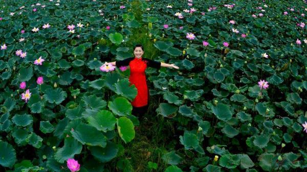 """""""Chỉ nhìn thôi là nhớ tới cả đời"""" những cánh đồng sen đẹp """"rụng tim"""" mùa nước nổi ở An Giang"""