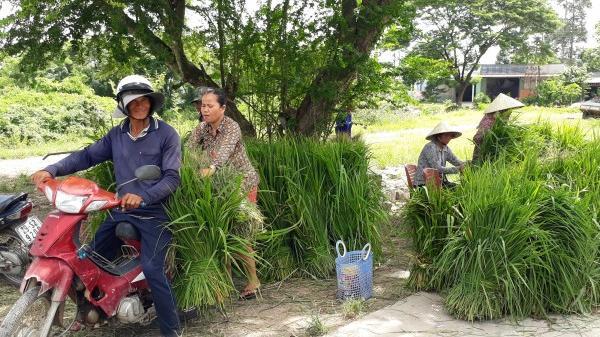 Độc đáo ngôi chợ chỉ mua bán cỏ dại, đồng giá ở An Giang