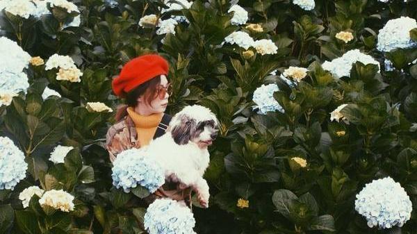 Chú chó 'số hưởng' du lịch khắp nơi cùng cô chủ An Giang từ lúc 1 tháng tuổi