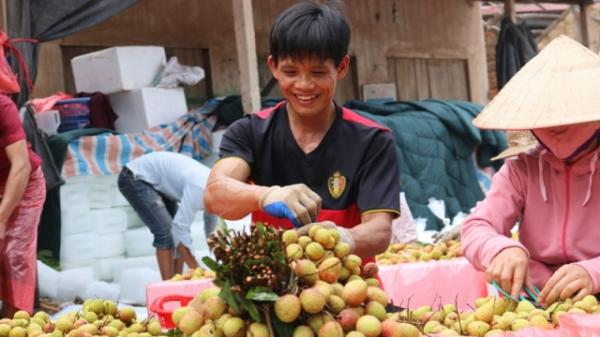 Vải thiều sớm Bắc Giang được mùa, được giá