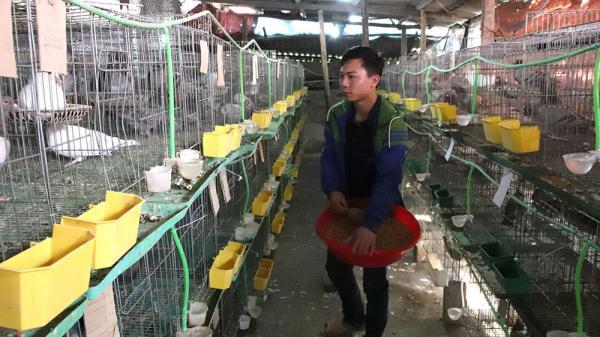 9X Bắc Giang nuôi bồ câu, lãi 15 triệu mỗi tháng