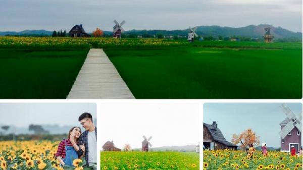 Hot teen Bắc Giang PHÁT SỐT với vườn hoa hướng dương RỰC RỠ không kém gì ở Đà Lạt