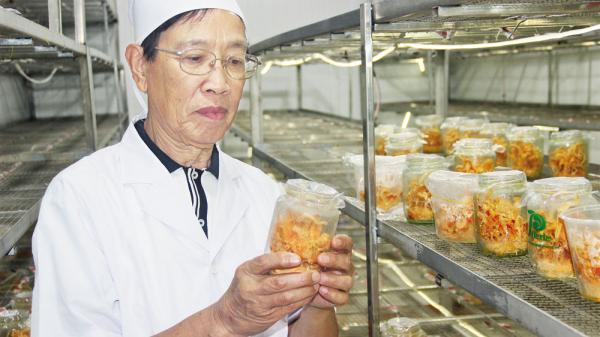 """Đông trùng hạ thảo - """"thần dược"""" mọc ở dãy Nham Biền, Bắc Giang"""