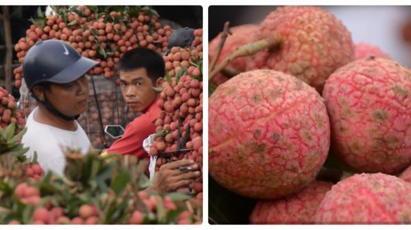 Chỉ 4000đ/kg, vải thiều được mùa mà người dân Lục Ngạn (Bắc Giang) rớt nước mắt vì giá thảm