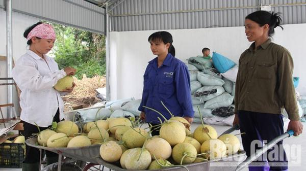 Hiệp Hòa (Bắc Giang): Hợp tác để phát triển nông nghiệp bền vững