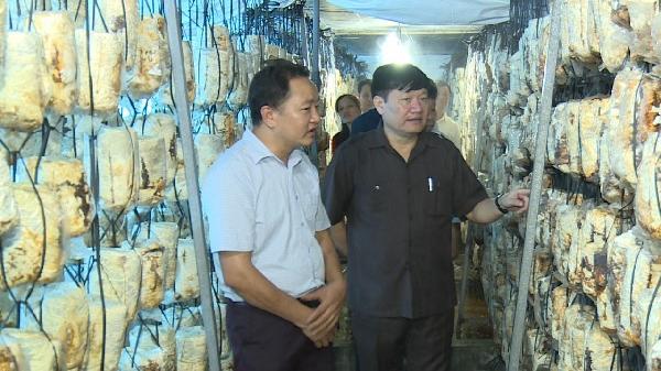 Ân Thi (Hưng Yên): Mô hình sản xuất nấm theo công nghệ Hàn Quốc cho thu nhập 2 tỉ đồng
