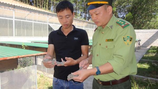 Kinh nghiệm của người nuôi tắc kè lãi 500 triệu đồng/năm ở Bắc Giang