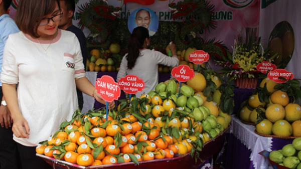Lục Ngạn (Bắc Giang) - vùng quả ngọt đệ nhất miền Bắc