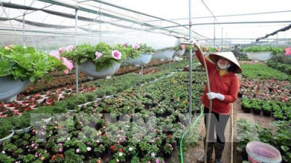 Xuân về với vựa hoa cây cảnh lớn nhất miền Bắc ở Hưng Yên