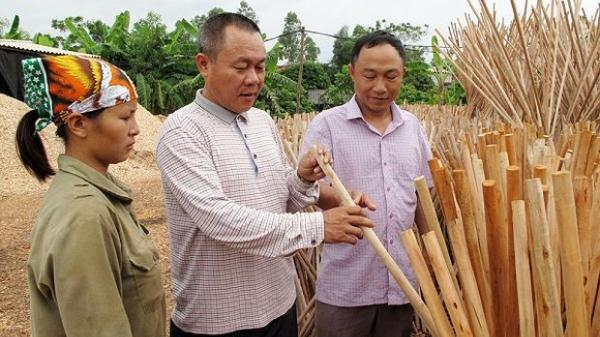 Người nông dân Bắc Giang thu tiền tỷ mỗi năm từ việc làm cán chổi