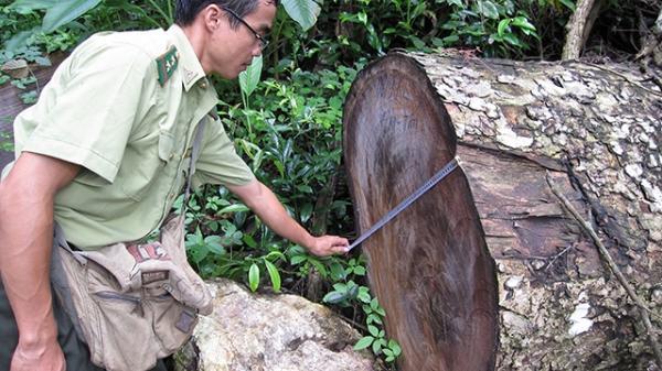 """Vườn quốc gia Ba Bể - Nguy cơ thành """"điểm nóng"""" phá rừng"""