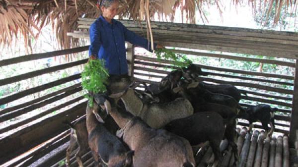 Hòa Mục phát triển đàn dê