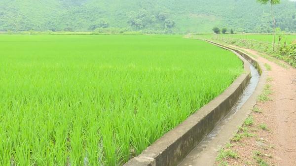 Chợ Mới hơn 80km kênh mương được kiên cố hóa