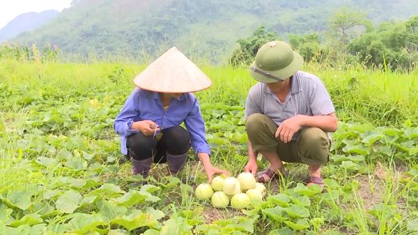 Quảng Khê phát triển nhờ trồng dưa
