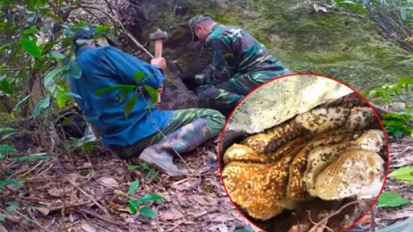 Chàng trai thọc tay khe đá lấy 6kg mật ong