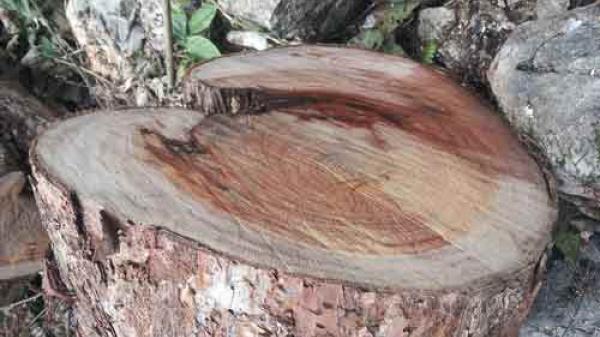 Bạch Thông - Phát hiện vụ phá rừng nghiêm trọng
