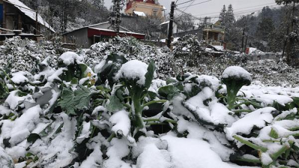 Cập nhật nhiệt độ các tỉnh ở Bắc Bộ: Nhiệt độ Bắc Kạn giảm mạnh