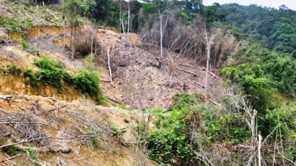 Chung quanh vụ án phá rừng ở xã Đổng Xá