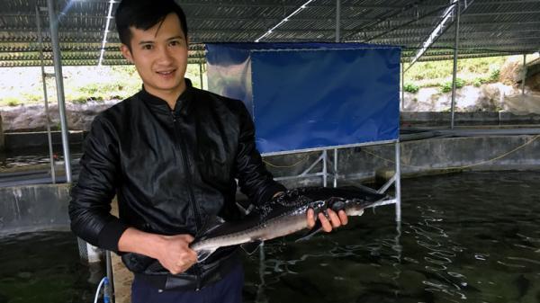 """Bắc Kạn: Trại cá nước lạnh """"khủng"""" nhất nơi thượng nguồn sông Cầu"""