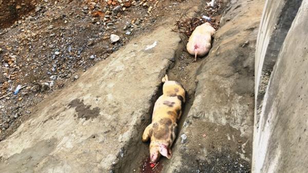 Kiểm soát chặt việc vận chuyển động vật, lâm sản trên tuyến Chợ Mới - Thái Nguyên