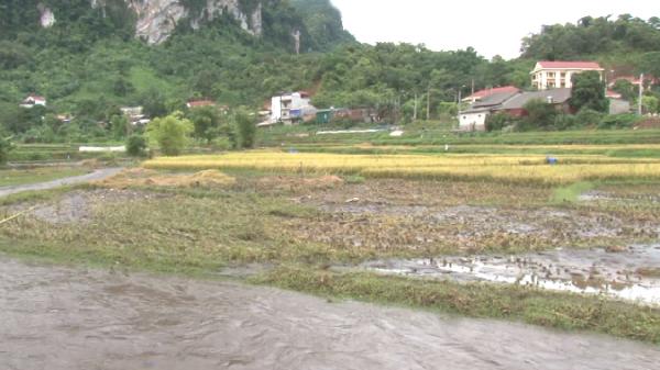 Mưa lũ gây thiệt hại trên địa bàn huyện Pác Nặm
