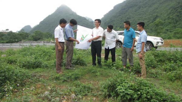Triển khai Dự án chăn nuôi bò Mông tại xã Quảng Chu