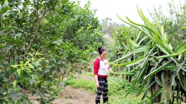Người phụ nữ có chí làm giàu ở xã Kim Lư