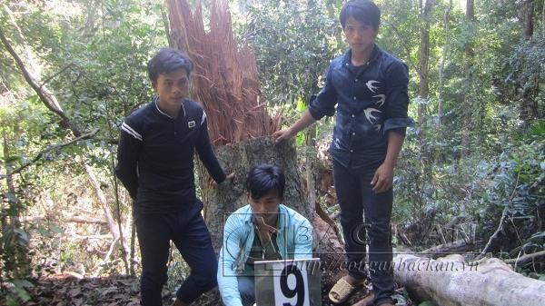 Công an huyện Bạch Thông: Làm rõ 7 đối tượng có hành vi phá rừng