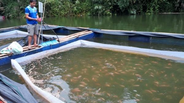 Người dân Bắc Kạn giàu có nhờ nuôi cá lồng trên hồ Bản Chang