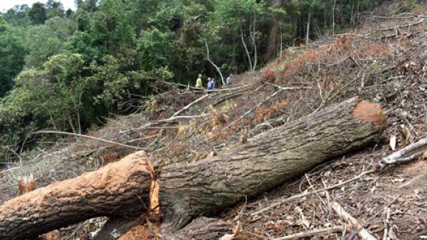Bắc Kạn: Tình trạng chặt phá rừng trái phép ở An Thắng