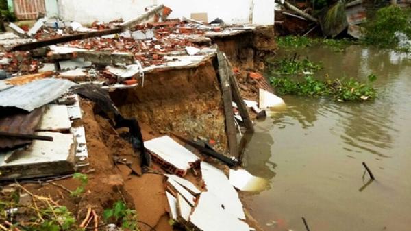Vũng Liêm: Di dời khẩn cấp 3 hộ dân bị ảnh hưởng sạt lở nghiêm trọng