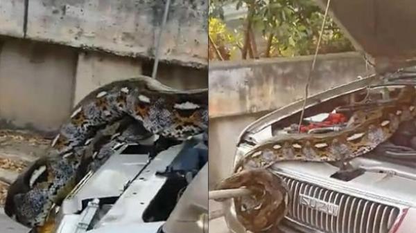 Vừa nổ máy thì đầu xe bất ngờ bốc khói, chủ xe chạy tới mở cốp thấy quái vật cuộn chặt cứng bên trong