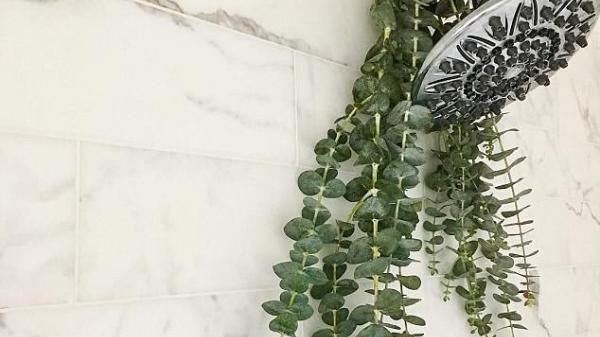 Cả nhà thắc mắc khi thấy mẹ treo cành cây này trên vòi sen, đến khi tắm ai cũng thích và hiểu lý do
