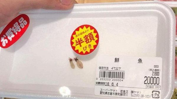 Lạ đời hai chú mực một nắng to bằng con chấy có giá đến 4 triệu đồng trong siêu thị Nhật khiến dân mạng Việt xôn xao