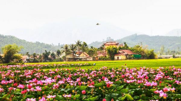 Cách không xa Nam Định có một nơi sen nở đẹp tựa cảnh tiên, không đi sẽ phí cả đời