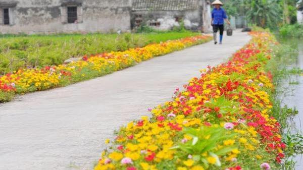 Cần gì đi đâu xa, ở Nam Định cũng có những con đường hoa thơ mộng đẹp không thua một xứ xở nào!