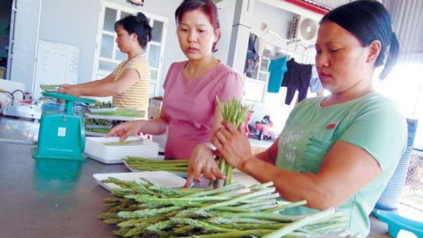 Bất ngờ cô nàng quê Nam Định bỏ lương nghìn đô về quê trồng rau chỉ vì lý do này...