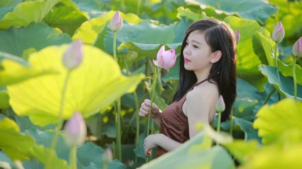 Cận cảnh đầm sen 'mới toanh' đẹp xao xuyến tại Thái Bình